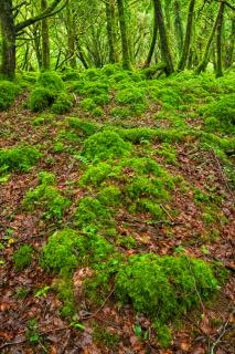 Killarney леса hdr бесплатно