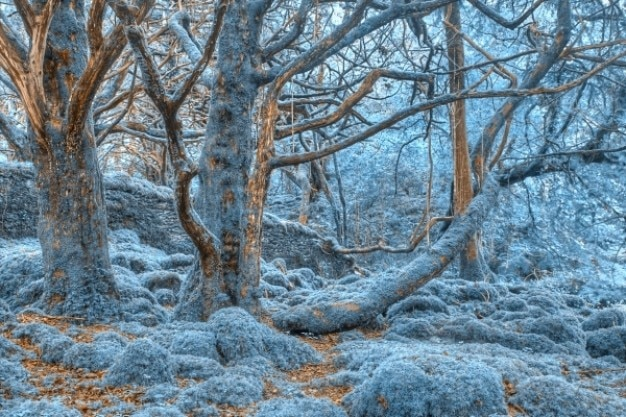 Killarney леса hdr
