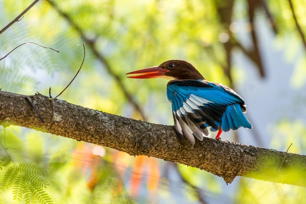 King fisher perched and posture