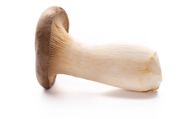 King oyster mushroom. eryngii mushroom, on white background.