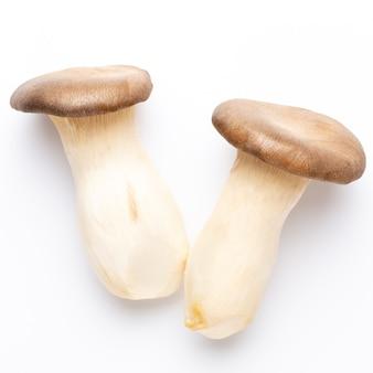 King oyster mushroom. eryngii mushroom