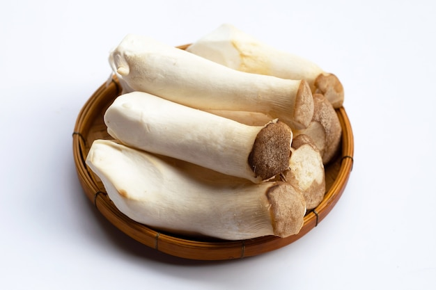 Королевский гриб вешенки на белой поверхности
