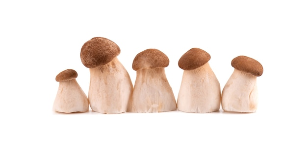 흰색 표면에 고립 된 왕 굴 버섯
