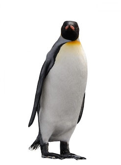 Король пингвин