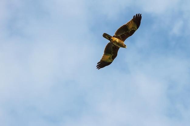 Kite in flight on sky