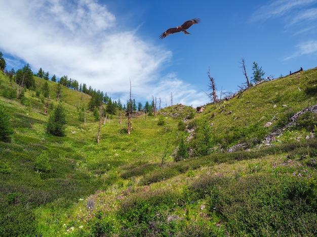 乾燥した森の上の凧。山の樹木が茂った斜面と木の上の猛禽類。乾燥した木々のある雰囲気のある山の風景