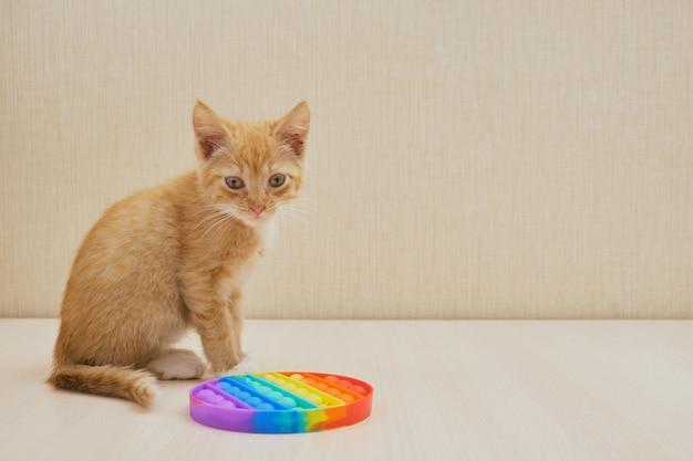 고양이와 스트레스 방지 장난감이 탁자 위에 팝니다.