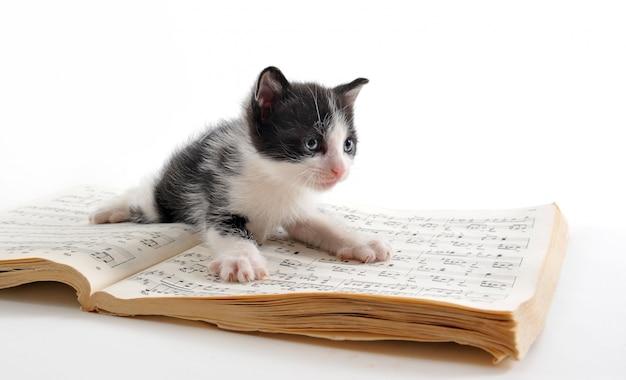 Котенок и музыкальная книга