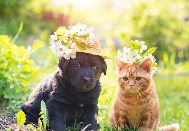 Котенок и щенок вместе сидят на траве в солнечный весенний день. рыжий котенок увенчан венчиком из цветов вишни. маленький щенок в соломенной шляпе с цветами вишни
