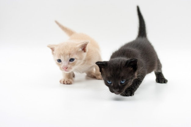Kitten black and another brown walking
