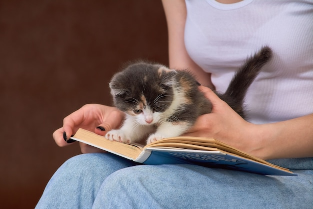 A kitten on a book on a young woman lap