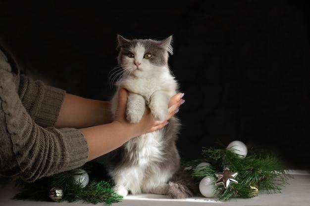 子猫はクリスマスツリーを壊しました。猫がクリスマスツリーをひっくり返した後、女性が掃除する