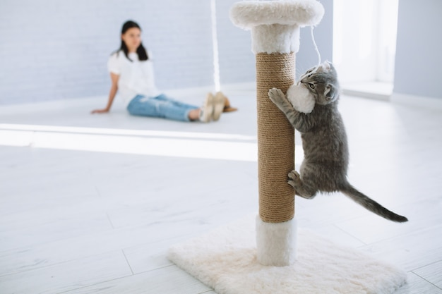 Some Reasons Why you Should Exercise your Pets