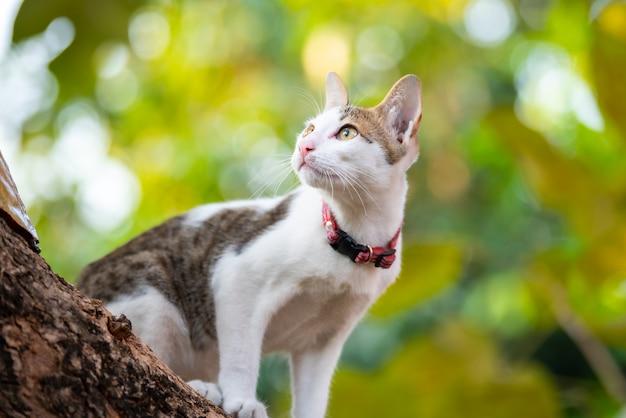 Kitten climbing tree and blur green background.