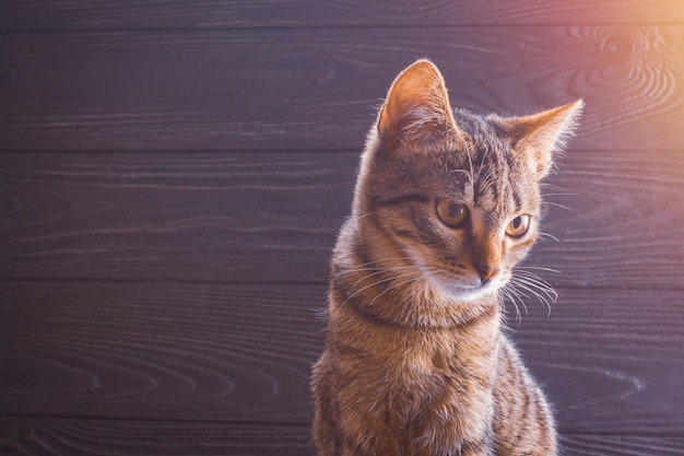 Kitten closeup on a wooden background with copy space