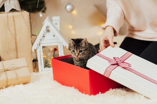 プレゼント用の子猫。