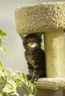 Kitten in the gaming complex for cats. cat house with scratching post