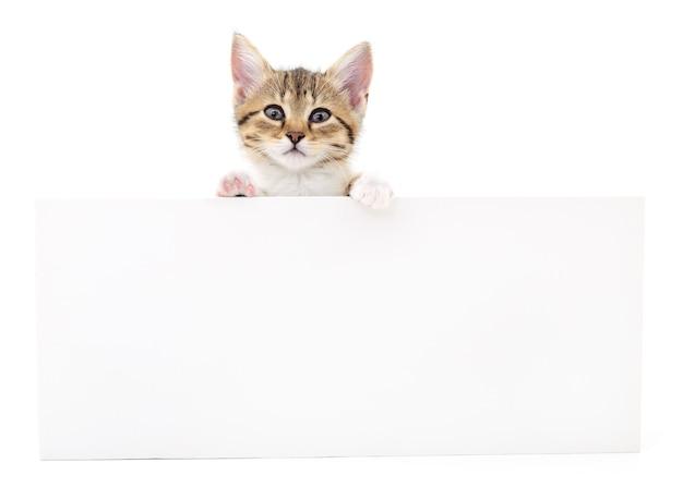Котенок висит над пустым плакатом, вы добавляете сообщение.