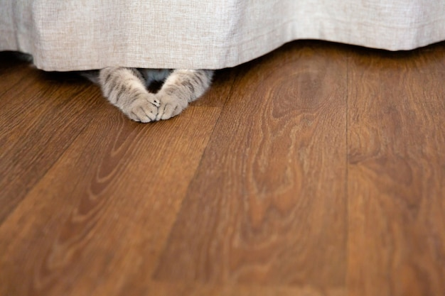 カーテンの後ろに隠れた子猫 カーテンの下から猫の足がはみ出す