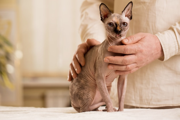 Котенок на сеансе с мастером рейки