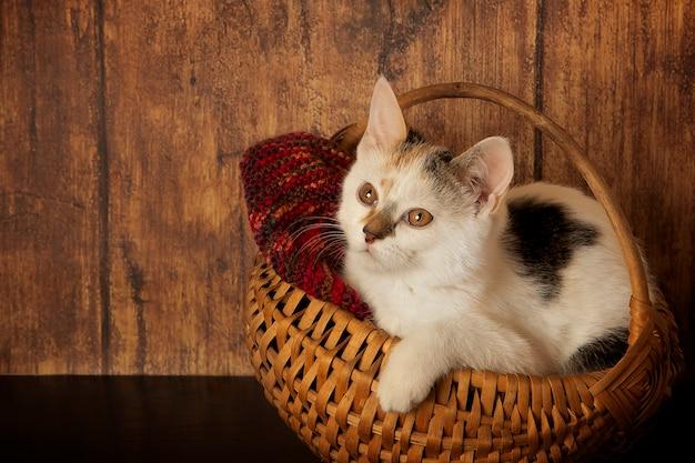 Котенок в мягкой корзине