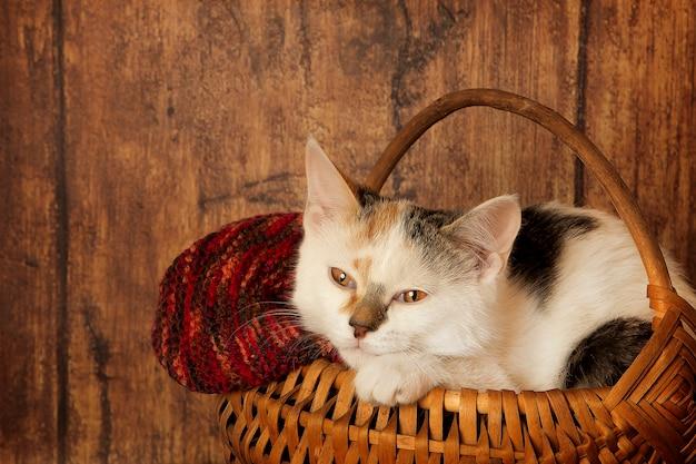 ソフトバスケットの子猫