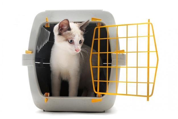 Котенок в переноске для домашних животных
