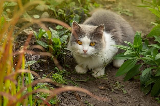 Котенок в саду с цветами на фоне