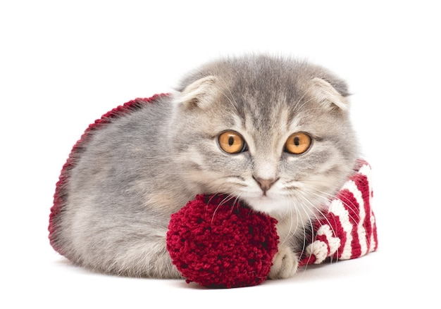 Kitten in a knitted red and white hat on a white background