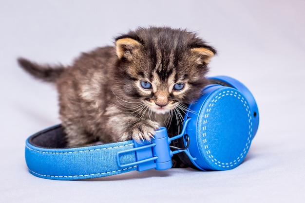 A kitten listening to the sounds of the music behind the headphones_
