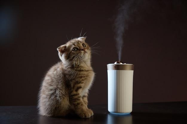 子猫はテーブルの上の加湿器からの蒸気を見ます