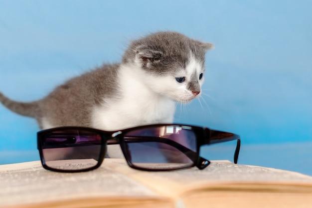 開いた本と眼鏡の近くの子猫。お気に入りの本を読む