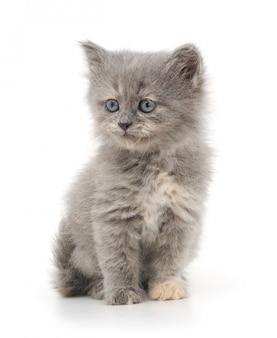 白い背景の上の子猫