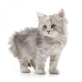 Котенок на белом фоне