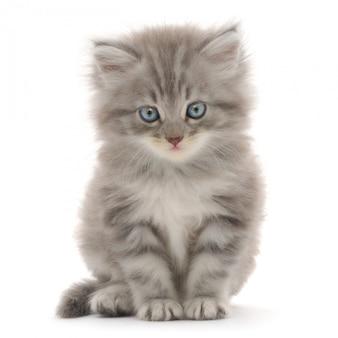 흰색 배경에 고양이