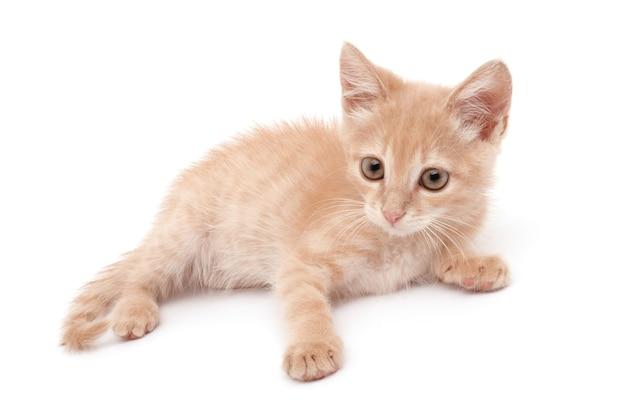 白い表面の子猫