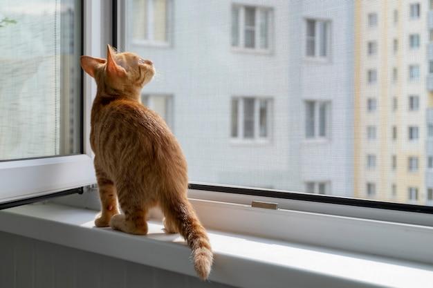 Котенок на подоконнике с защитной москитной и противоскользящей сеткой