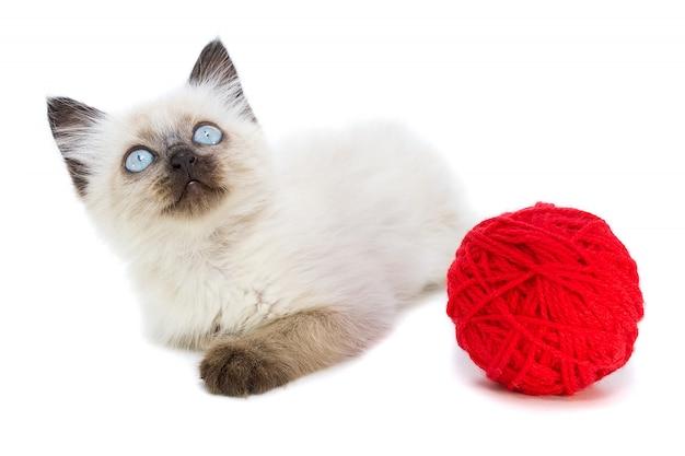 Котенок на белом