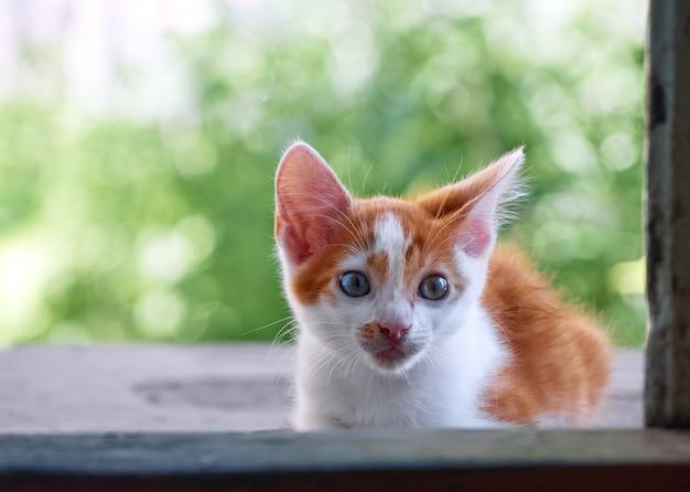 庭で遊ぶ子猫。