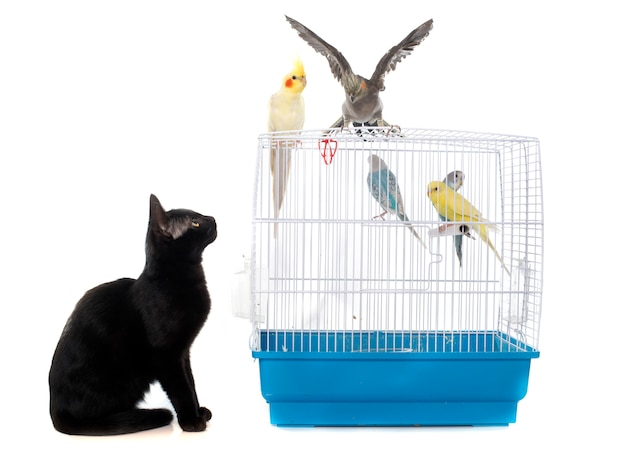 Kitten playing with bird