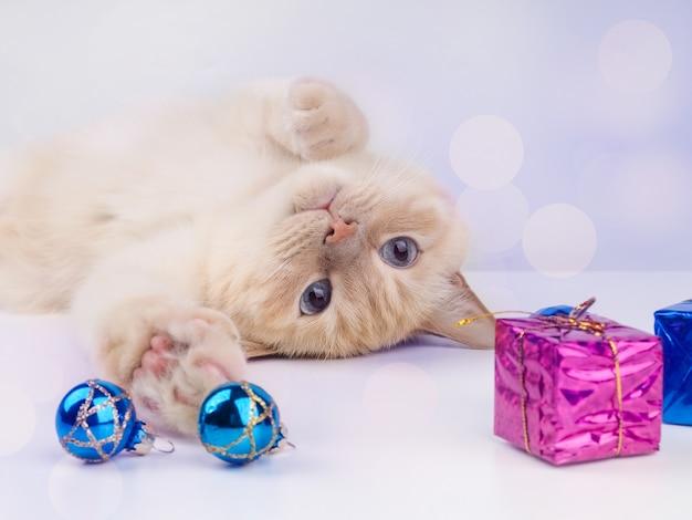 크리스마스 공을 가지고 노는 새끼 고양이, 크리스마스 장난감을 가지고 노는 애완 동물.