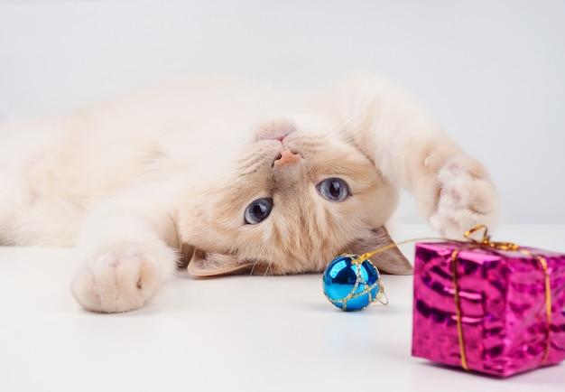 クリスマスボールで遊ぶ子猫、クリスマスおもちゃで遊ぶペット。