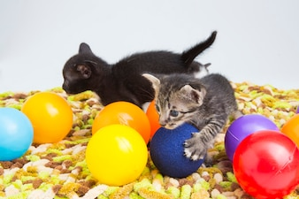 Kitten playing with colorful balls