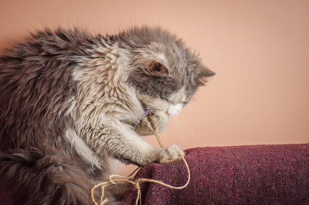 Kitten playing with toy,  playful cat gnawing or eating wire