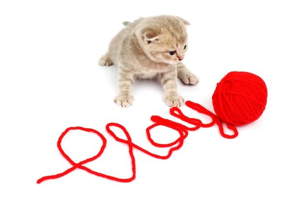 子猫は赤い羊毛で遊ぶ