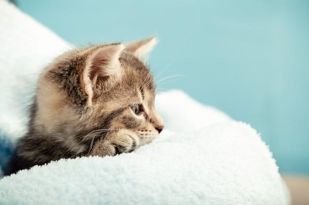 側面を見て縦断ビューで足と子猫の肖像画。青い格子縞のかわいい新生児ぶち子猫。