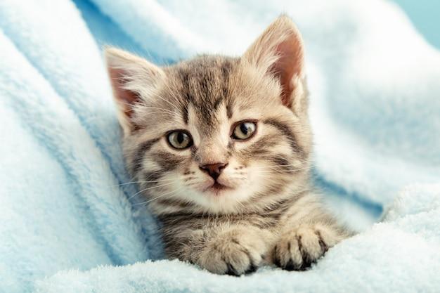 足の付いた子猫のポートレート。青い格子縞のかわいいぶち子猫。生まれたばかりの子猫 赤ちゃん猫 子供の家畜。家のペット。居心地の良い冬。閉じる。