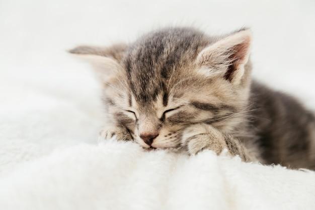 Kitten portrait with paws. cute tabby kitten sleep on white plaid. newborn kitten baby cat kid domestic animal. home pet. cozy home winter. closeup.