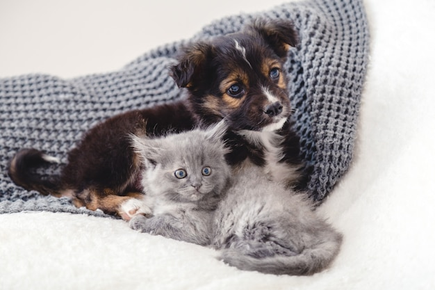 Kitten and puppy. group of two small animals lie together on bed. sad gray kitten and black puppy on white blanket alone at home. cat dog friends. beautiful animal children.