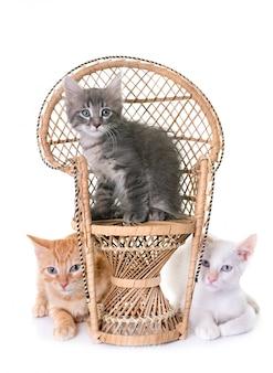 Kitten and rattan chair